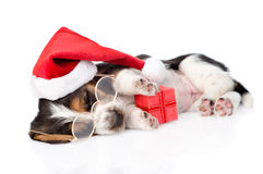 cute basset hound puppy with red gift box and santa hat. isolated on white Stock Photos