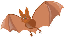 Cute bat flying on white background Royalty Free Stock Images