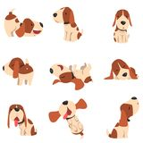Cute beagle dog in various poses set, funny animal cartoon character vector Illustration on a white background royalty free illustration