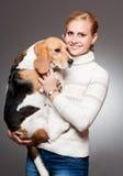 Cute beagle. Stock Photography