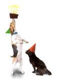 Cute beagle and pug Stock Photos