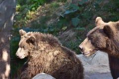 Cute bear baby Royalty Free Stock Image
