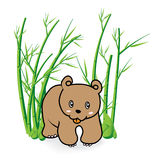 Cute Bear in Bamboo Forrest 04 Stock Image