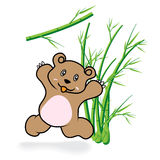 Cute Bear in Bamboo Forrest 05 Stock Photography