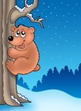 Cute bear climbing tree Stock Photography
