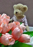 Cute Bear doll and pink tulip flowers Royalty Free Stock Image