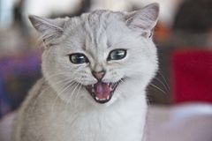 Cute and beautiful cats stock images