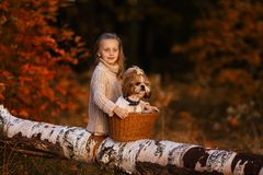 Cute beautiful girl on a log in the forest with a dog in a basket stock photos