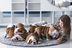 Cute beautiful little girl playing with puppies of English bulldog Stock Photos