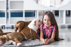 Cute beautiful little girl playing with puppies of English bulldog Royalty Free Stock Images