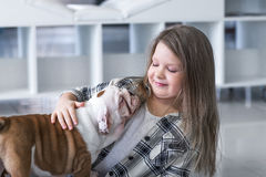 Cute beautiful little girl playing with puppies of English bulldog Royalty Free Stock Photography