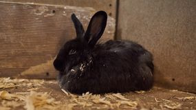 Cute beautiful rabbit in the petting zoo. royalty free stock images
