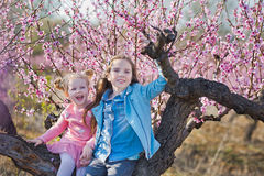 Cute beautiful stylish dressed brunette and blond girls sisters standing on a field of spring young peach tree with pink Royalty Free Stock Photos