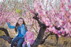 Cute beautiful stylish dressed brunette and blond girls sisters standing on a field of spring young peach tree with pink. Flowers.Lady dressed in jeans in Stock Images