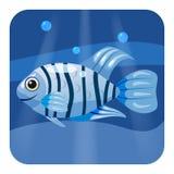 Cute beautiful blue tropical fish, on sea background, ocean, vector, isolated, cartoon style. Cute beautiful tropical fish, on sea background, ocean, vector Stock Photos
