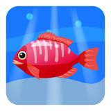 Cute beautiful red tropical fish, on sea background, ocean, vector, isolated, cartoon style. Cute beautiful tropical fish, on sea background, ocean, vector Stock Photography