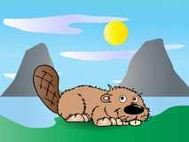 Cute  Beaver Royalty Free Stock Images