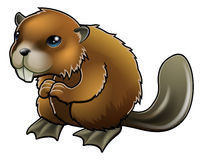 Cute Beaver. A cute cartoon brown beaver mascot character Royalty Free Stock Image