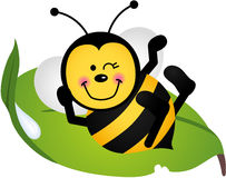 Cute bee sitting on a green leaf Stock Photos