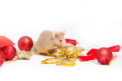 Cute beige mouse sits among different gold and red Christmas decorations. Royalty Free Stock Image