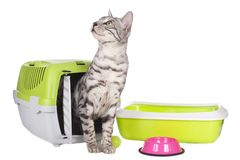 Cute bengal cat with basic cat equipment Stock Images