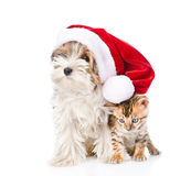 Cute Bengal cat and Biewer-Yorkshire terrier puppy with red sant Royalty Free Stock Images