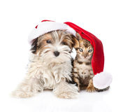 Cute Bengal cat and Biewer-Yorkshire terrier puppy with red santa hat. isolated on white Royalty Free Stock Photography