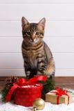 Cute Bengal kitten Stock Photos
