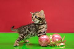 Cute bengal kitten is standing on a green mirror flooring with christmas balls. Traditional holidays stock photography