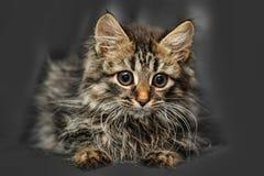 Cute big-eyed kitten Stock Photo
