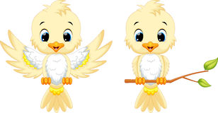 Cute bird cartoon Stock Photos