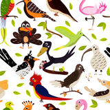 Cute bird design seamless texture on white background. Cartoon style. Vector Royalty Free Stock Photos