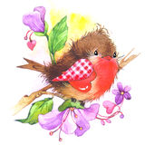 Cute bird and heart illustration watercolor Royalty Free Stock Photo