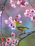 Cute bird sitting on blossom tree branch Stock Photo