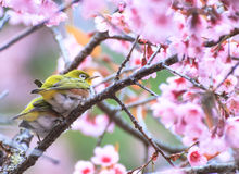 Cute bird sitting on blossom tree branch Royalty Free Stock Images