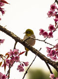 Cute bird sitting on blossom tree branch Stock Image