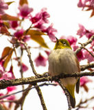Cute bird sitting on blossom tree branch Royalty Free Stock Photo