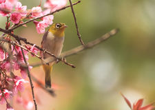 Cute bird sitting on blossom tree branch Stock Photos