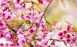 Cute bird sitting on blossom tree branch Royalty Free Stock Photography