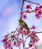 Cute bird sitting on blossom tree branch Stock Photography