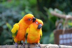 Cute bird Royalty Free Stock Images