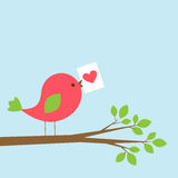 Cute bird with Valentine card on branch Royalty Free Stock Photography