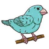 Cute bird. Stock Photography
