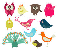 Cute birds Stock Photo