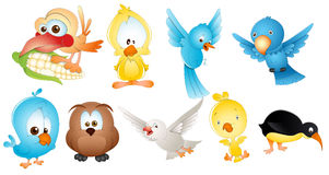 Cute Birds. Lovely Art Design of Cute Birds Vector Illustration Royalty Free Stock Photography