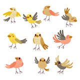 Cute Birds Collection Royalty Free Stock Photography