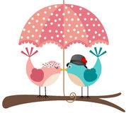 Cute birds couple under umbrella Stock Photos