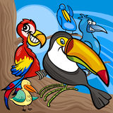 Cute birds group cartoon illustration Stock Photography