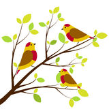 Cute birds sitting on branches. Royalty Free Stock Images