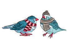 cute birds warm dressed in winter season Royalty Free Stock Photos